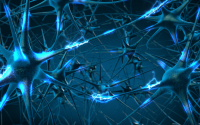 A Brief Introduction to Neurotransmitters